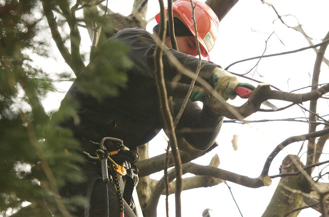 hauswartungbaumschnitt grünpflege